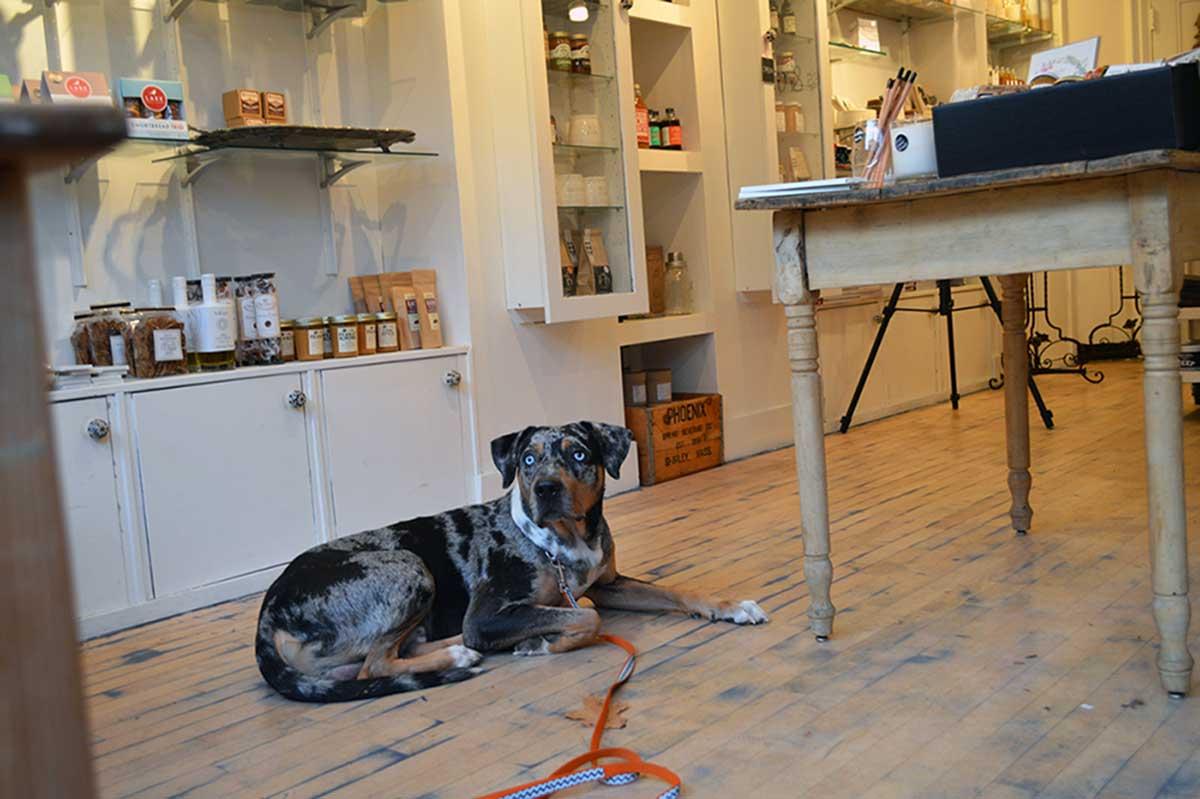 dog training rhode island